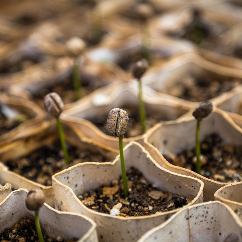 Sprouting seeds in biodegradable pots